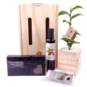 chocolate_decadence_living_tree_gift box
