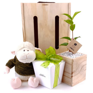 our_little_lamb tree gift box