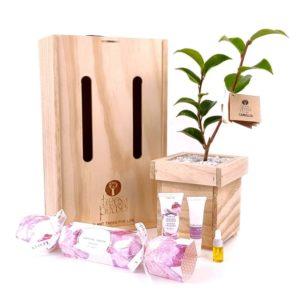linden_leaves_cracker_tree_gift