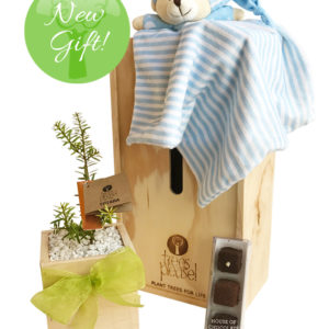 Tree gift baby blue bear