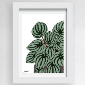 Watermelon Peperomia Print